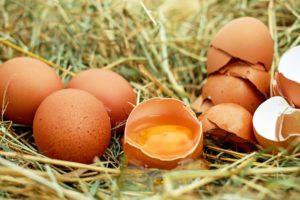 Eier für ein leckeres Hundefutter
