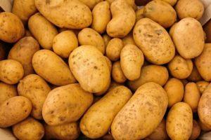 Kartoffeln für selbstgemachtes Hundefutter